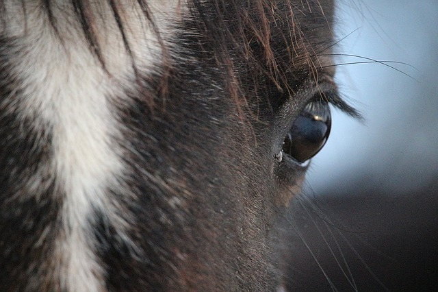 Pony-Europameisterschaft: Illustrationsbild