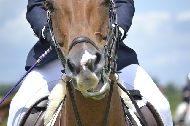 Riesenbeck International: Springreiten